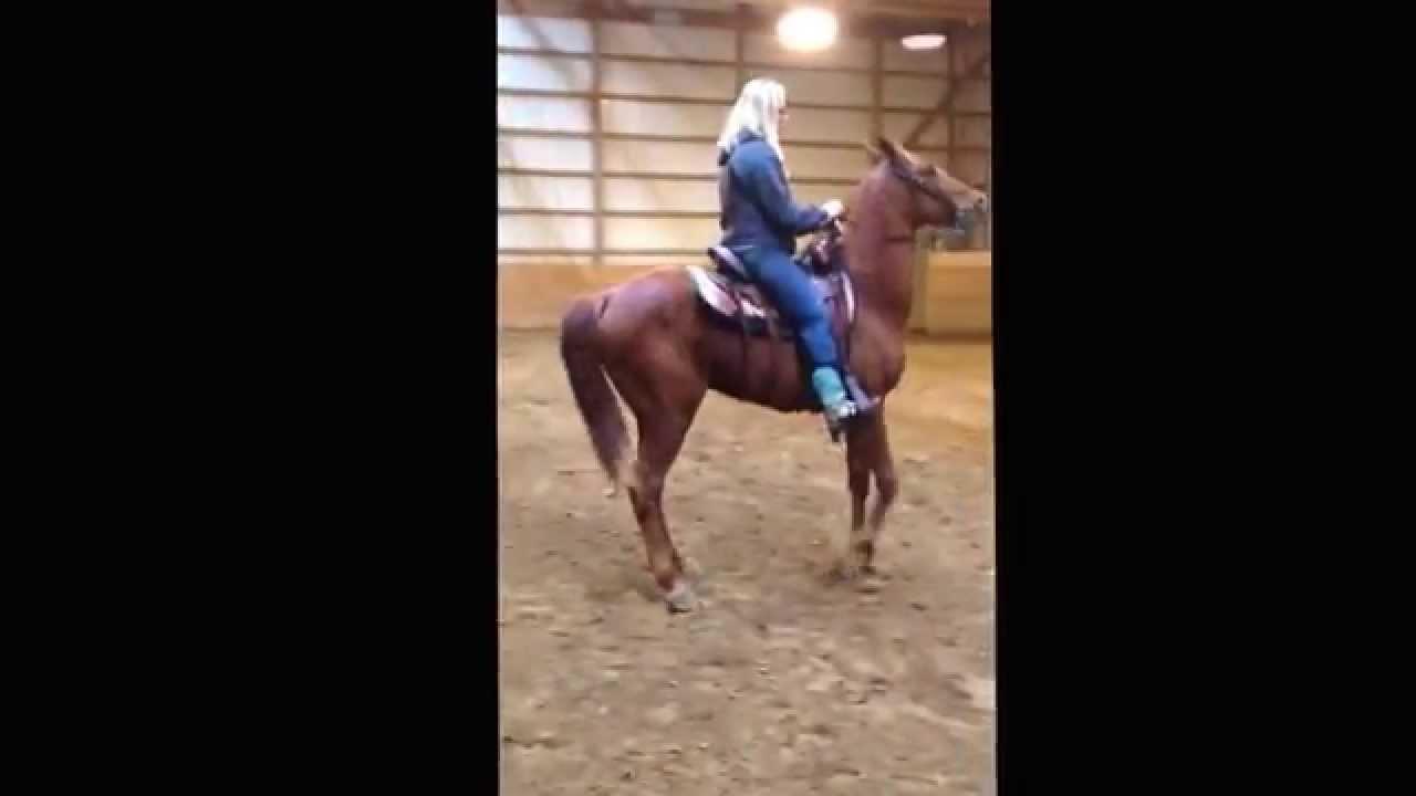 La grange 2013 grade Tennessee walking horse gelding. $2000